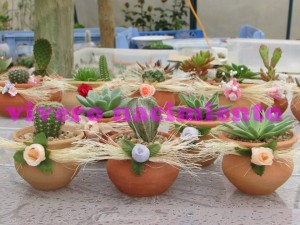 cactus y suculentas  recuerdos de matrimonio , originales y ecologicos