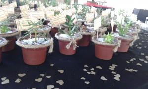 cactus y suculentas recuerdos para todo tipo de celebraci�n